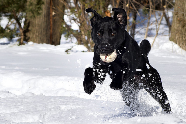dog-playing-in-the-snow